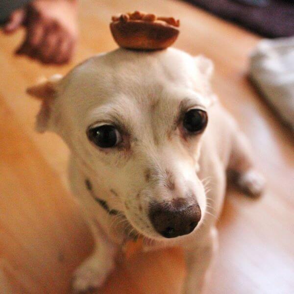 Apple Pup Pies | wildwildwhisk.com