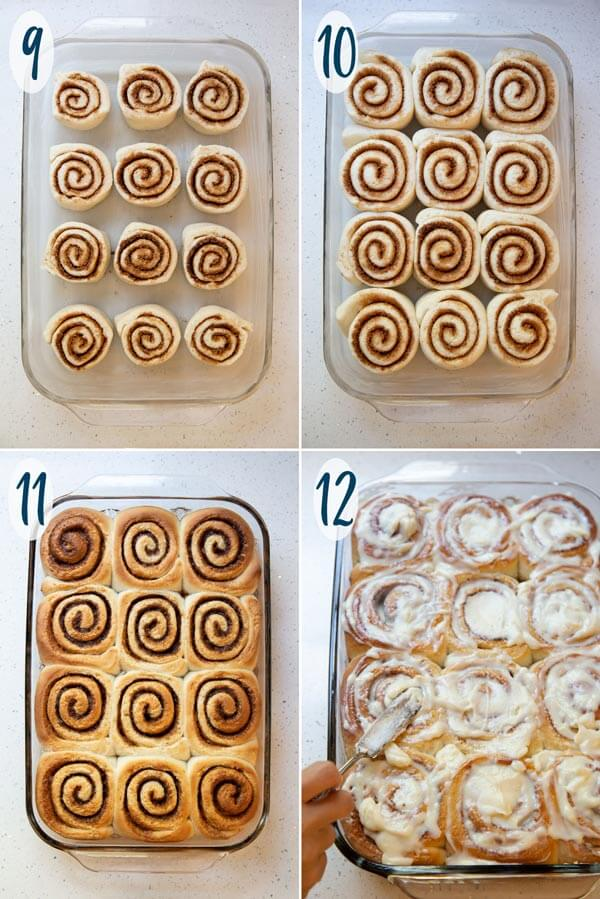 Proofing and baking cinnamon rolls