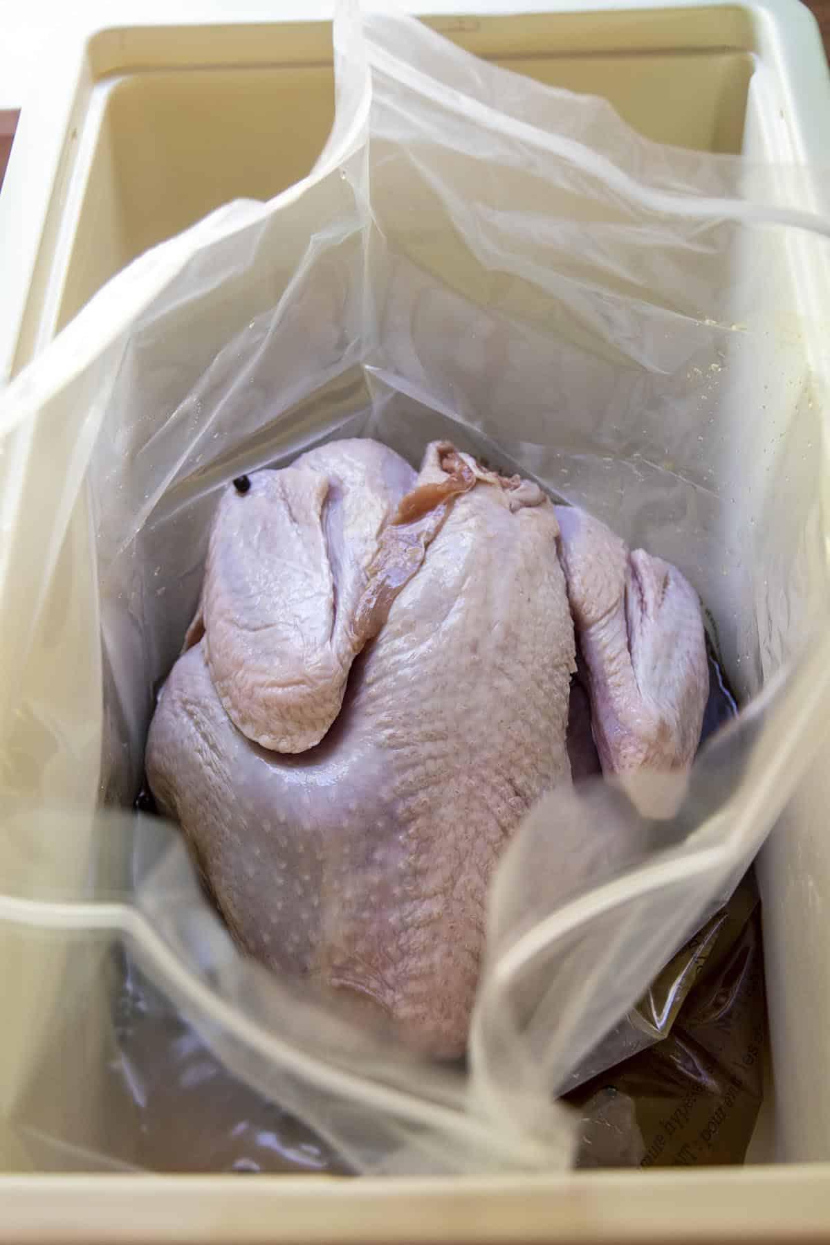 A turkey siting in the brine inside a brining bag